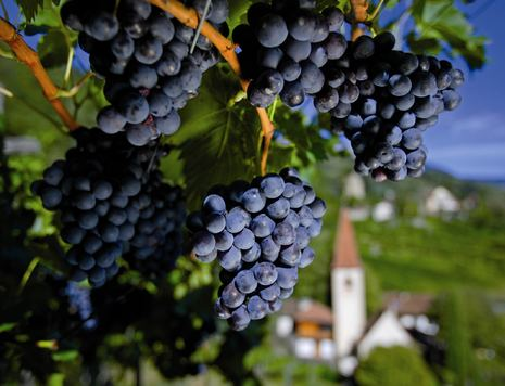 Wine and grapes in South Tyrol, Hotel Hohenwart